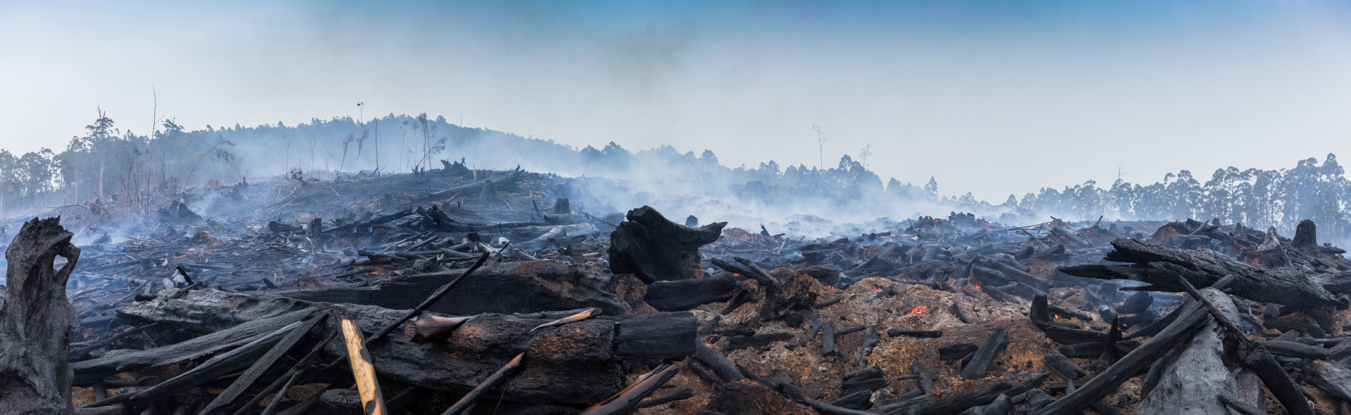After the Bushfires